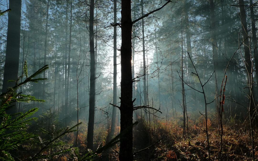 Potenciál biomasy v příštích dekádách